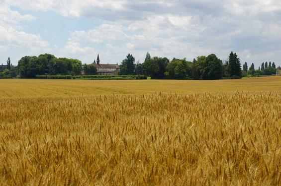 L'Abbaye de Sept-Fons vue depuis les champs de blé